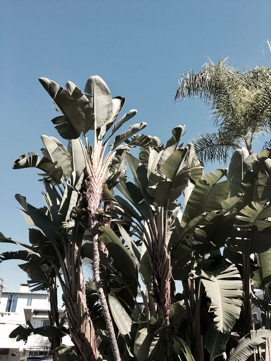 California Dreaming: San Diego & Coronado Island 2